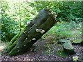 SE0422 : Fungus on tree stump by Humphrey Bolton