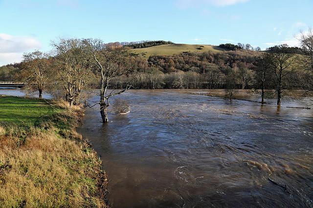 A swollen River Tweed
