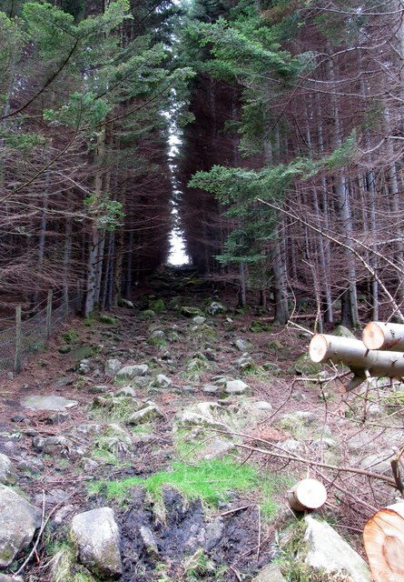 Path ascending on to Slievenamaddy from Donard Wood