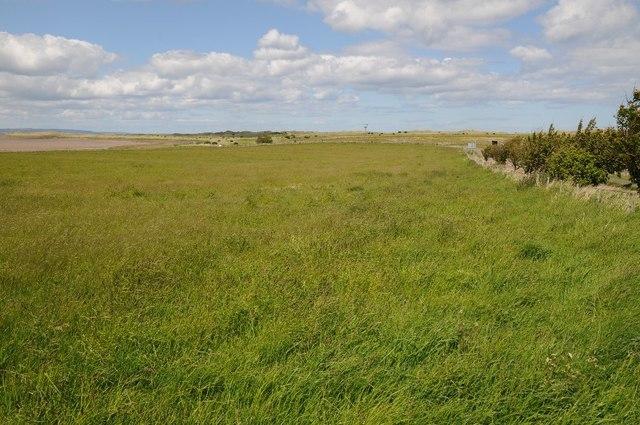 Grassland on Holy Island