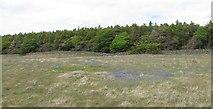 J3431 : Bluebells on dry land above the Tullybranigan Bog by Eric Jones