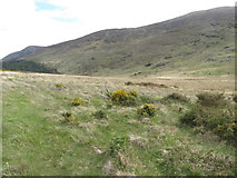 J3431 : Dry heath on the northern edge of the Tullybranigan Bog by Eric Jones