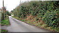 TG3211 : Francis Lane, Blofield Heath by Evelyn Simak