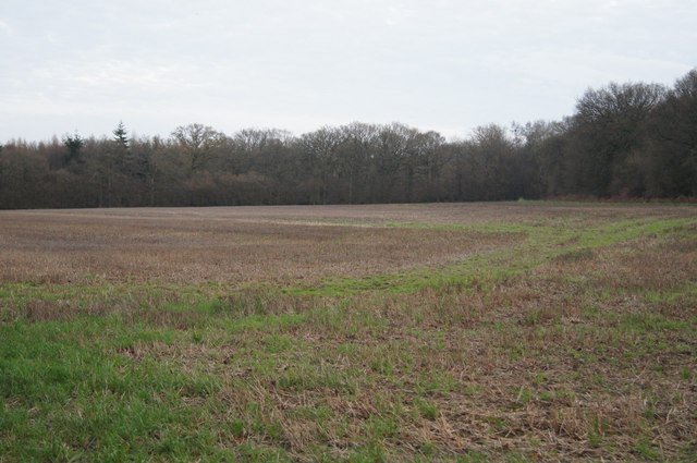 Copse Ground Field (10 acres) by Sandy B