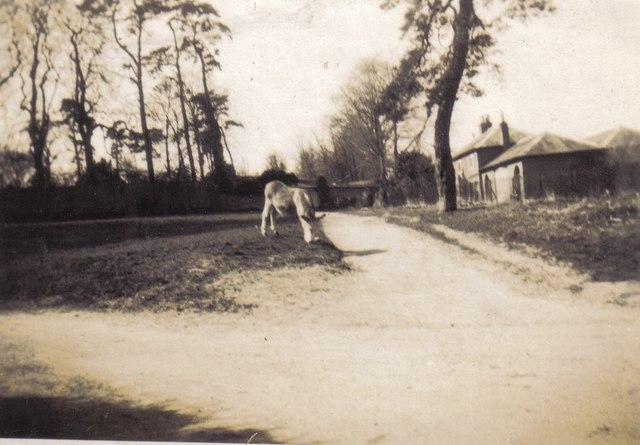 Donkey at Clatford