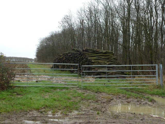 Pile of logs near Barnwell Wold