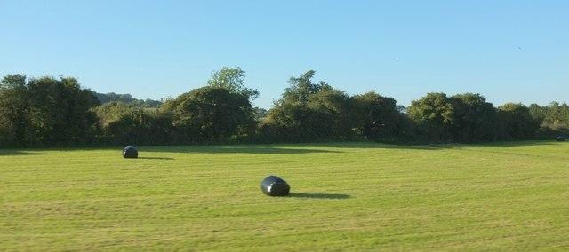 Field near Upton Noble