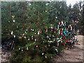 SK2099 : The Langsett memory tree by Steve  Fareham