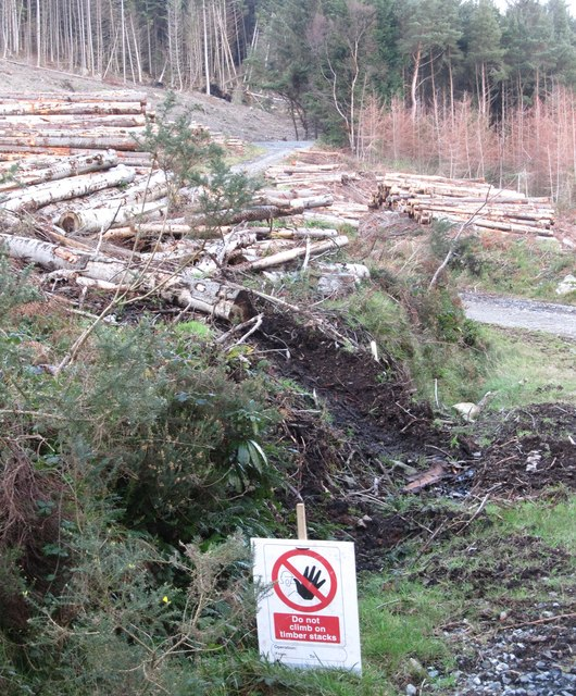 Log piles in Donard Wood