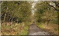 NZ2441 : Deerness Valley Walk below Broompark by Trevor Littlewood