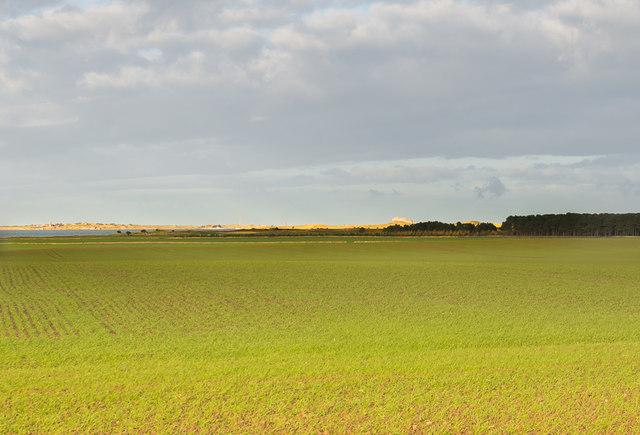 Field near Ross