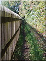 SK5949 : Hollinwood Lane Vicinity, Calverton, Notts by David Hallam-Jones