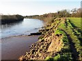 NZ1365 : Landslip on River Tyne north bank by Andrew Curtis