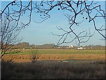 TQ4085 : Angel Pond, Wanstead Flats by Stephen McKay