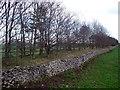 SK1167 : Embankment of the former Cromford & High Peak Railway by Ian Calderwood