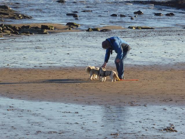 Dog walker on Whitley Sands