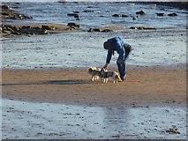 NZ3573 : Dog walker on Whitley Sands by Oliver Dixon