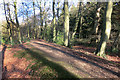 SP8302 : Grim's Ditch at Redland End by Des Blenkinsopp