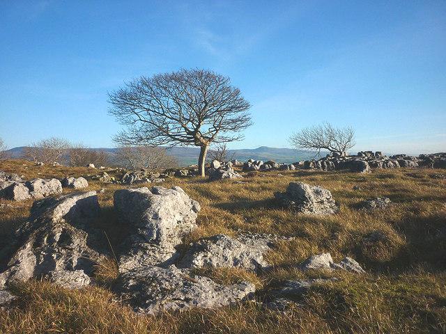 Trees, grass and limestone, Newbiggin Crags