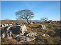 SD5579 : Trees, grass and limestone, Newbiggin Crags by Karl and Ali