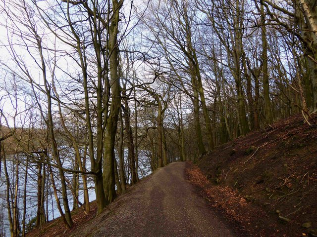 Through the woods on the bridleway