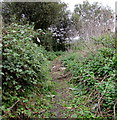 SZ5990 : Rough track past brambles near Ryde by Jaggery