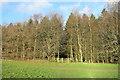 SP8402 : Chiltern Way near Hampden House by Des Blenkinsopp