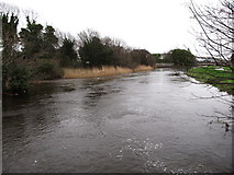 J3731 : The swollen Shimna River approaching Shimna Bridge by Eric Jones