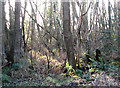 TG4010 : New Year's Eve sunshine in Damgate Wood by Evelyn Simak