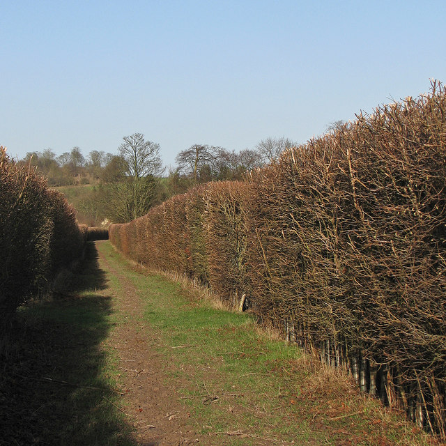 Between high hedges