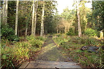 NS2209 : Woodland Path, Culzean Country Park by Billy McCrorie