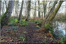 NS2209 : Path round Swinston Pond by Billy McCrorie