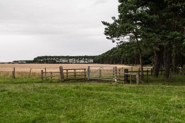Farmland near Ross
