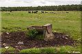NU1336 : Water trough by Ian Capper