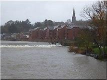 SX9291 : River Exe in flood, Trews Weir by David Smith