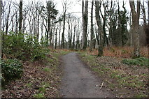 NS2209 : Woodland Path to Culzean Castle by Billy McCrorie