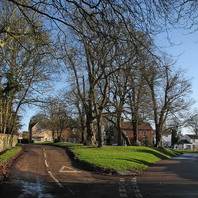 Therfield: winter trees