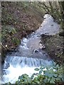 SX4659 : Stream, Budshead Wood by timothy luckham