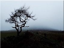 NZ5812 : Roseberry Common by Mick Garratt