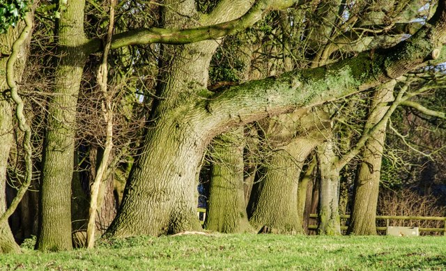 Compton Durville: Impressive Tree Line