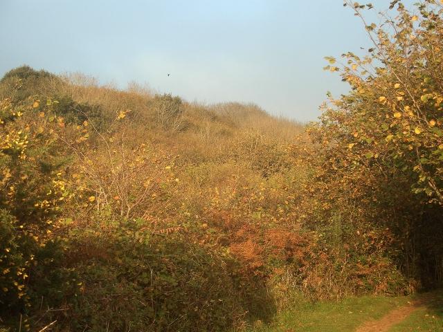 Cwm y Gaer in autumn (3)