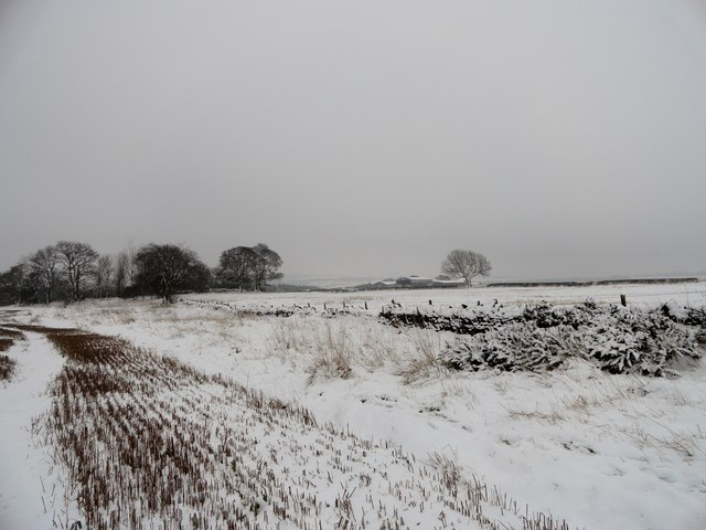 Snow covered fields near High Bradley farm