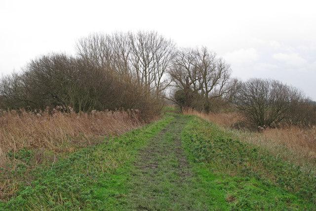 Wherryman's Way, along the Yare near Rockland Broad