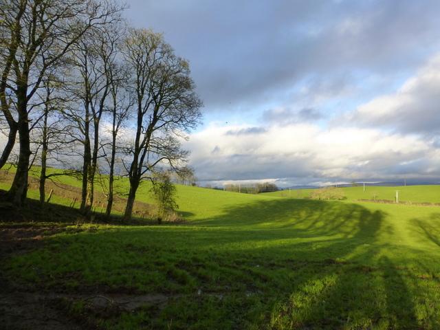 Trees and shadows, Beagh