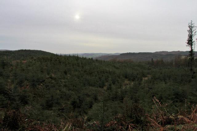 Bogle Crag Wood