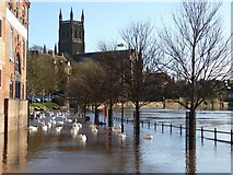 SO8454 : Flooded South Quay by Philip Halling