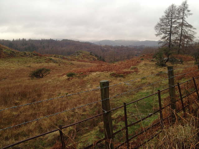 View from public byway above Tarn Hows