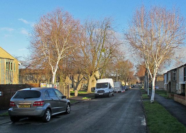 Lichfield Road: winter trees