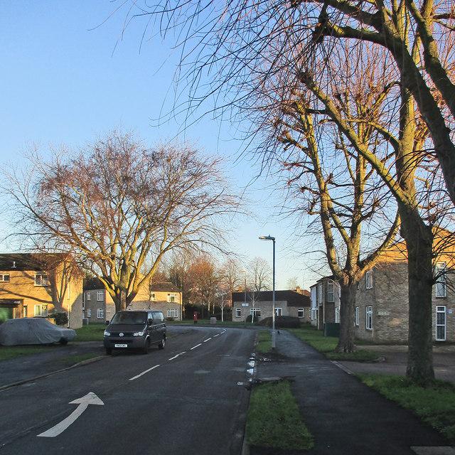 Lichfield Road: sunlit treetops