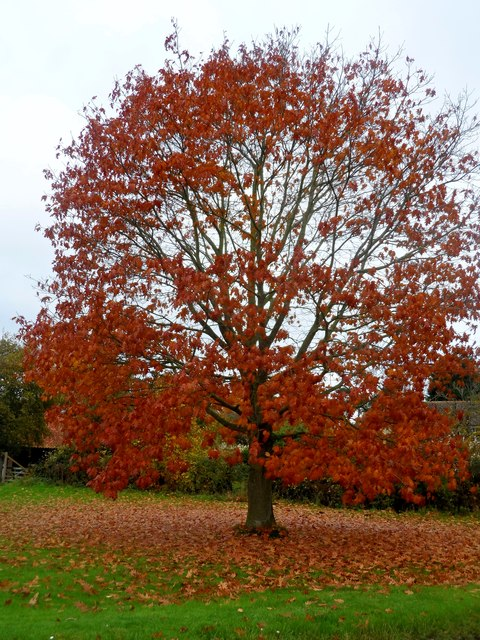 Tree at crossroads near Bredfield
